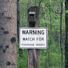 Danger Ahead: Rattlesnakes in Wayne County?